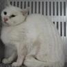 里親様を待っています。成猫 ♂283