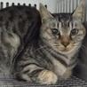 里親様を待っています。成猫♀284