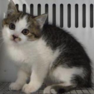 里親様に迎えられました。子猫 ♀285