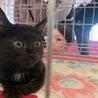 黒猫 ミーヤ