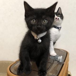 2ヶ月位 小柄だけど元気な可愛い黒 ラムくん