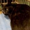 若そうな黒猫不安げに鳴いています