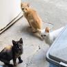 地域の母猫が急死し残された仔猫達