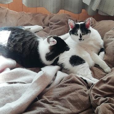我が家の2匹。普段は距離を取っていますが、冬は寒いので、油断。