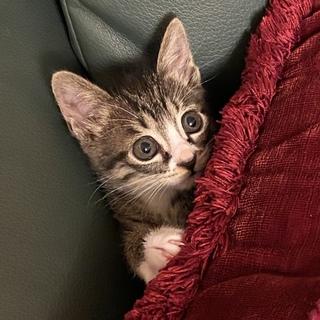 可愛い子猫ちゃん、飼って下さい。