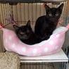 黒猫好きさんのお迎えを待っています