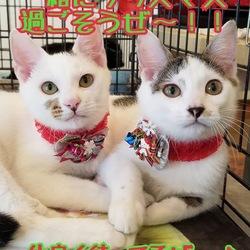 11/23(土)ララガーデン川口 保護猫譲渡会 サムネイル2