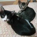子猫の兄弟一緒にお願いします!