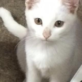 野良猫さんが産んだ3匹の子猫の里親を探しています