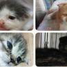 【行き場をなくした猫達を助けたい】
