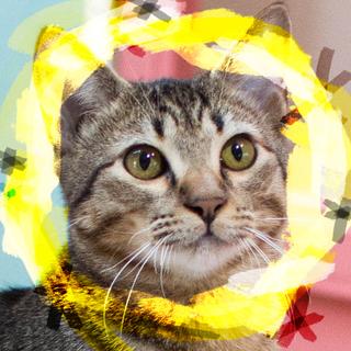 猫初心者向けキジトラ♡フェラーリ6ヶ月