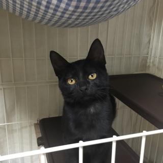 幸運を呼ぶ黒猫 ジロポン