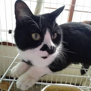 多頭飼育崩壊からの保護猫の里親様、急募です!