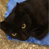 心細そうに鳴く若そうな黒成猫 サムネイル2