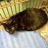 心細そうに鳴く若そうな黒成猫 サムネイル3