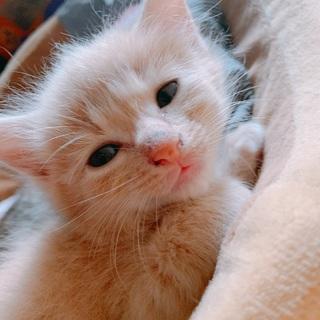 長毛でふさふさの仔猫ちゃん