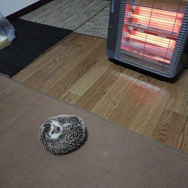 暖を取るきな