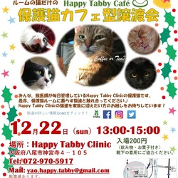 クリスマス保護猫カフェ型譲渡会