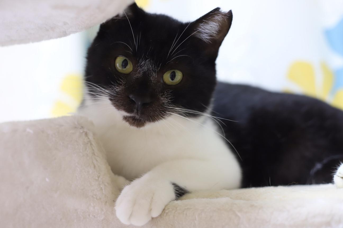 サンシャイン 池崎 猫 スマイル NPO法人 猫の森(千葉県船橋市)