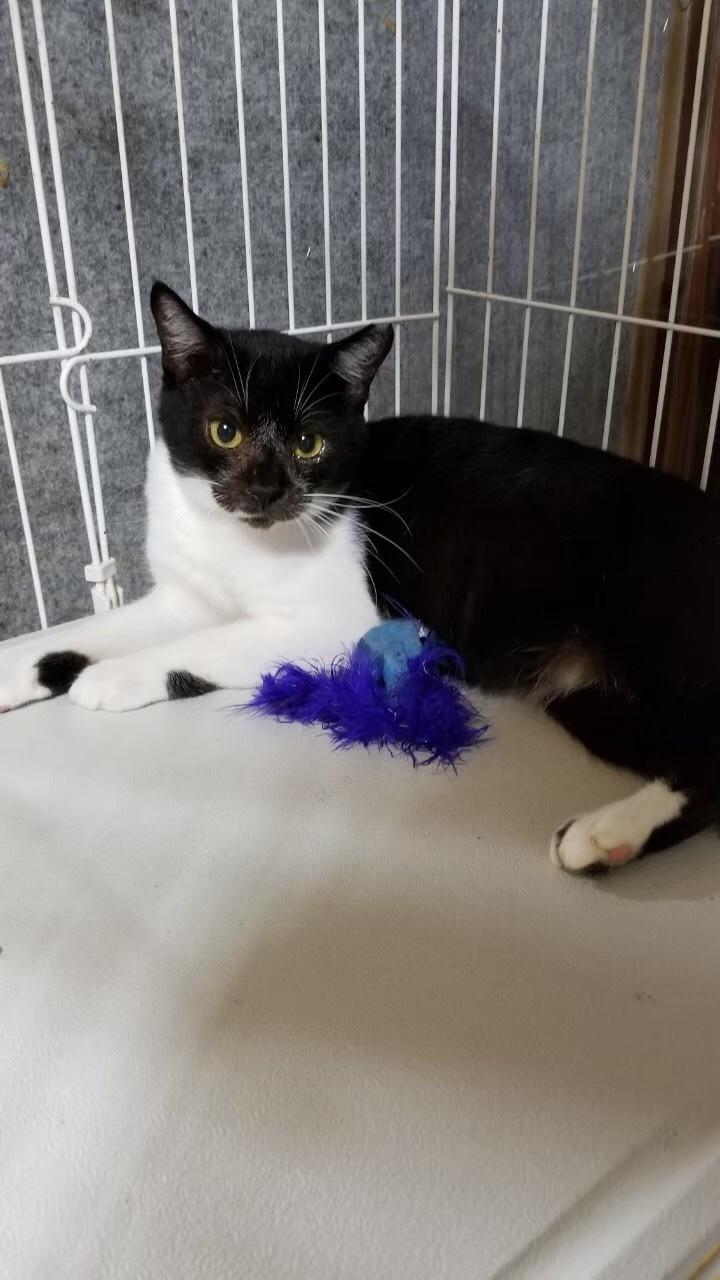 猫 サンシャイン 池崎 保護