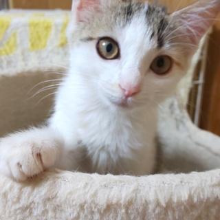可愛い三毛子猫