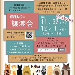 11月30日 12月1日 藤井寺保護猫譲渡会