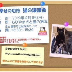 12月1日もりやま犬と猫の病院 保護猫譲渡会