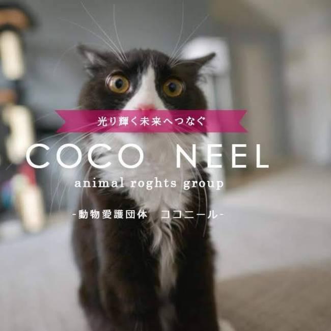 COCO NEELのカバー写真