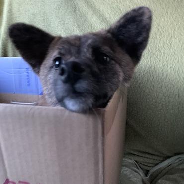 車で踏ん張れないから箱の中で安定しました