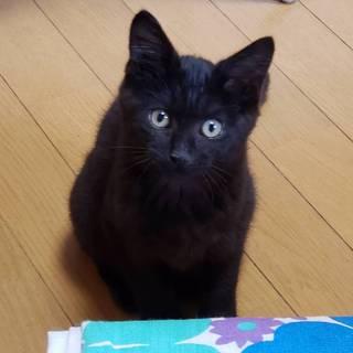 新しい名前はてんちゃん☆スケさん3ヶ月
