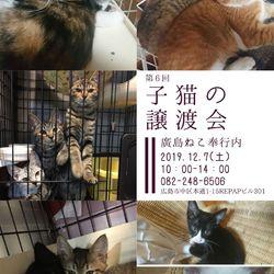 第6回 廣島ねこ奉行 子猫の譲渡会