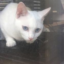 今朝の窓ぎわ猫。