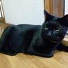 優しくて穏やかで甘ったれな黒猫デビ君