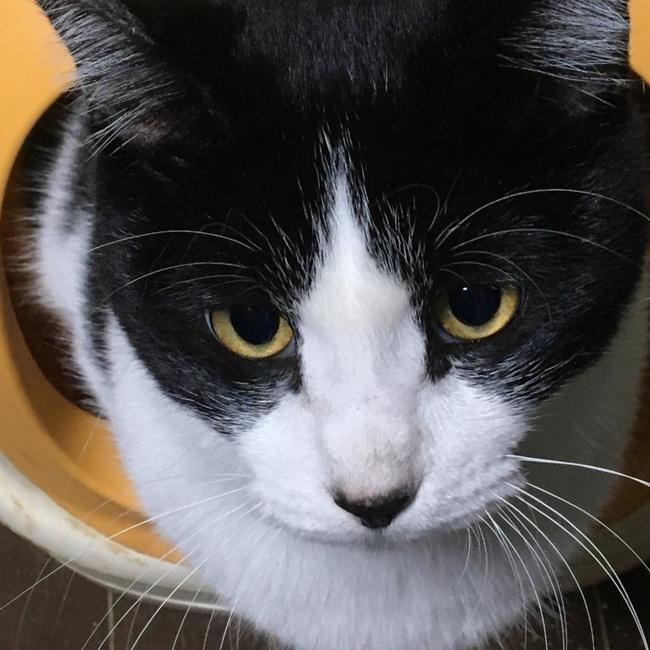 猫部はなはた@なちゅらのカバー写真