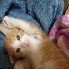 生後2ヶ月の仔猫です