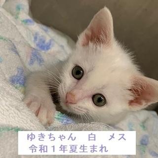 超美猫ちゃん! どこから見ても可愛いユキちゃん
