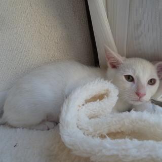 生後3か月、白い子猫は怖がりさん