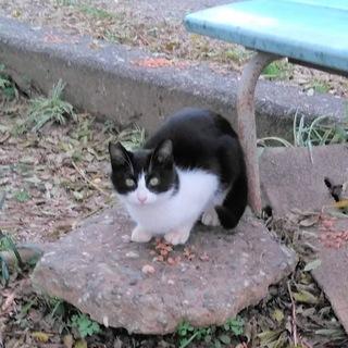 【大至急募集】TNR現場の兄妹子猫♂