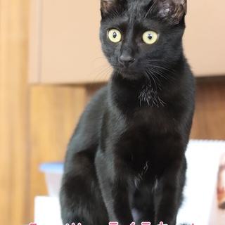 黒子猫 ライラちゃん 里親様募集