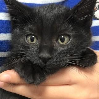 交渉中です。癒し系黒猫レオ君2ヶ月