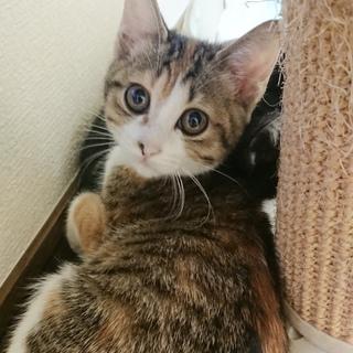 ゴロスリ甘えん坊の美猫さん