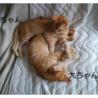 甘えん坊な兄妹☆ サムネイル3