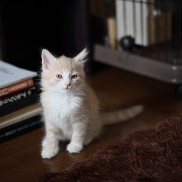 子猫(2ヶ月)の頃