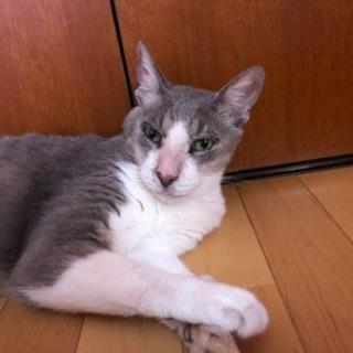 優しいシニア猫エディくん