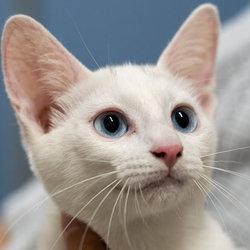 「子猫30匹の譲渡会」・愛知県みよし市 サムネイル1