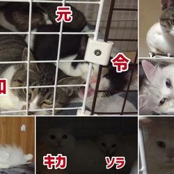 保護猫5期生&白猫さん