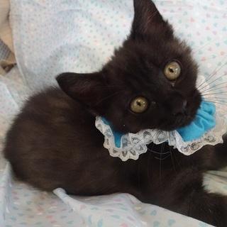 人大好き黒子猫☆ボンボン君 3ヵ月