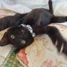 人大好き黒子猫☆ボンボン君 3ヵ月 サムネイル2