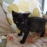人大好き黒子猫☆ボンボン君 3ヵ月 サムネイル3