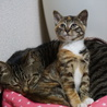 里子に出した子猫 その1(写真は里親さんの提供)